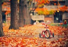 HD обои, осень, листва, трехколесный велосипед, парк