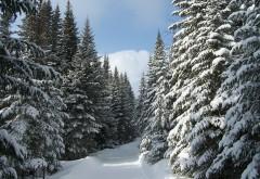 HD обои Фото заснеженного леса