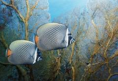 HD обои Фото подводного мира