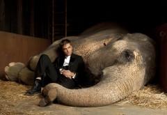 HD обои Актер Роберт Патинсон с большим слоном