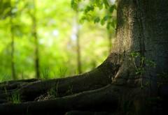 HD обои Мощное дерево в тихом лесу