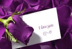 HD обои романтическая открытка I love you на фоне пурпурных …