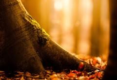HD обои Осень в лесу