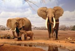 HD обои Фото слонов в высоком качестве