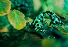 HD обои Фото ярких лягушек