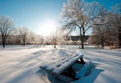 HD обои Снимок в высоком качестве зимнего леса