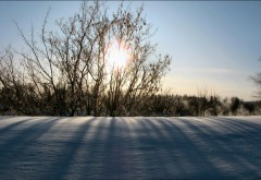 HD обои зимней природы