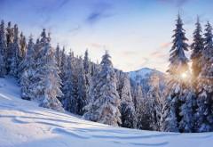Широкоформатная заставка с красивым зимним лесом