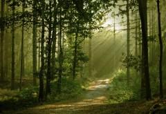 Тихий лес широкоформатные HD обои скачать на рабочий ст…