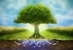 Сказочное дерево широкоформатные HD обои скачать