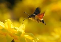 Снимок мотылька который собирает нектар