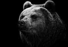 Медведь широкоформатные HD обои скачать на рабочий сто�…