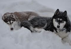 Заставка с удивительными собаками