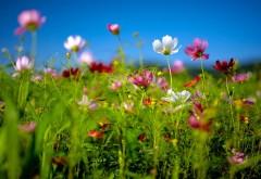 Заставка ярких цветочков