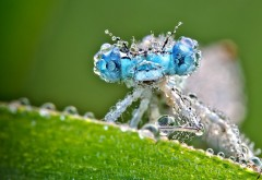 Макро фото стрекозы