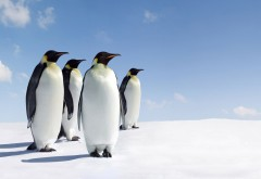 Пингвины широкоформатные HD обои скачать на рабочий стол