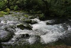 Beautiful water nature free Desktop wallpaper downloads