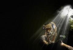 Ягуар в наушниках широкоформатные HD обои скачать