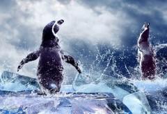 3D пингвины широкоформатные HD обои скачать на рабочий с…