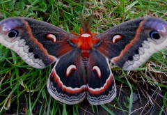 Макро-снимок милой бабочкой