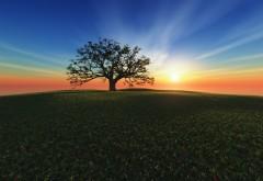 3D рисунок с цветочным полем одиноко стоящим деревом и закатом