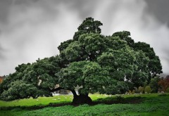 Картинка могучего дерева