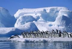 Снег, пингвины, море, айсберг, арктика, зима, HD обои, ска�…