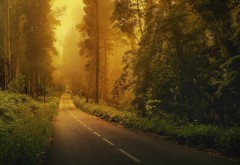 Фото высокого качества с дорогой проложенной через лес