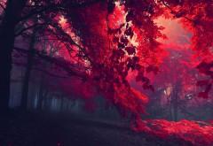 Широкоформатная обойка с красивым осенним лесом