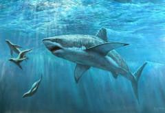 Хищная акула широкоформатные HD обои скачать на рабочи�…