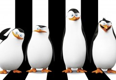 Пингвины из Мадагаскара широкоформатные HD обои скачать