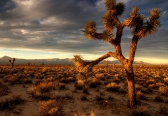 Фото пустыни с множеством кактусов