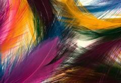 Разноцветные перья фоновые заставки скачать