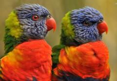 Яркие попугаи птички фоновые заставки скачать