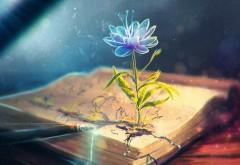 Абстрактный цветок в книге вырос заставки скачать на р…