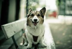 Собачка на лавочке в городе фоновые заставки скачать
