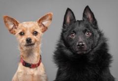 Собака, пара, эмоция, щенки, фоны, заставки
