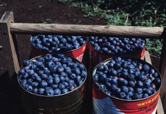 Фото вкусных ягод скачать