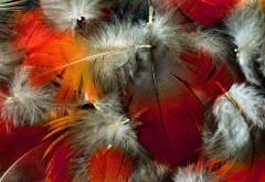 Разноцветные перья, абстрактные, фоны, заставки