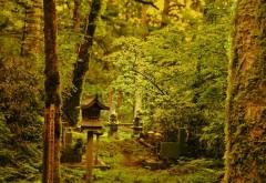 Фото лесной чащи в Китае скачать