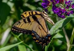 Бабочка, цветы, трава, насекомые, листья, фоны, заставки