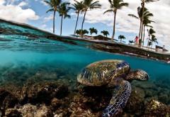 Фото увлекательного подводного мира скачать