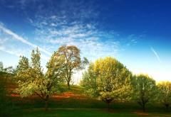 Фото поляны на которой растут деревья скачать