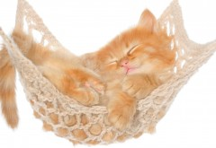 Кошка, гамак, котенок, рыжий, пушистый, фоны, заставки