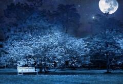 Ночь, скамейка в парке, деревья, звезды, полная луна, не�…