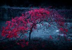Листья деревьев, осень, туман, фоны, заставки