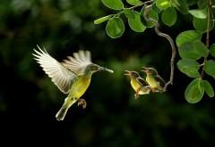 Птичка, птенцы, малыши, птенчики, семья, маленькая птичка, фоны, заставки