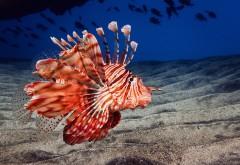Подводное фото рыбы