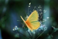Пушистый, желтая бабочка, фоны, заставки
