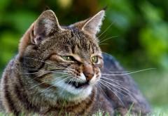 Злой прикольный кот фоновые заставки скачать
